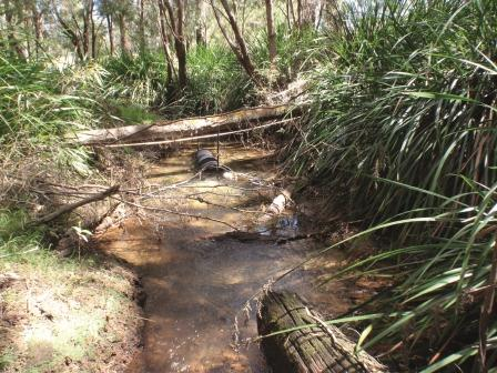 Upper Chapman Brook